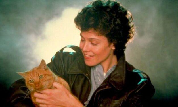 Los gatos más famosos de los 80's